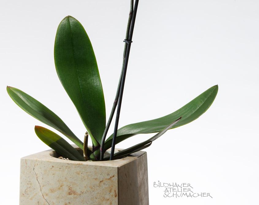 Orchideen Navigation